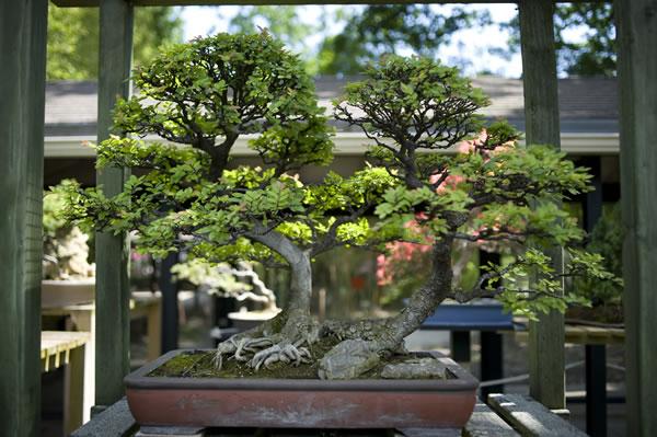 Jardins d 39 inspiration japonaise Jardin japonais bonsai
