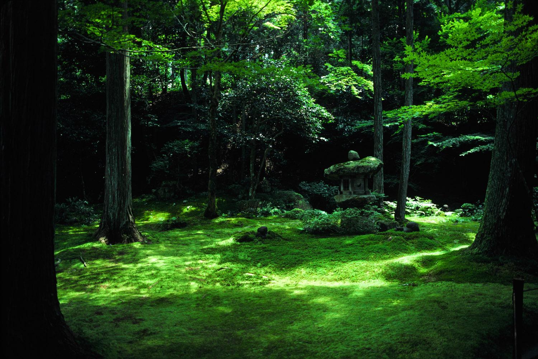 Jardins for Jardin kyoto